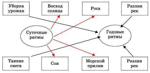Параграф 14. Географическая оболочка.