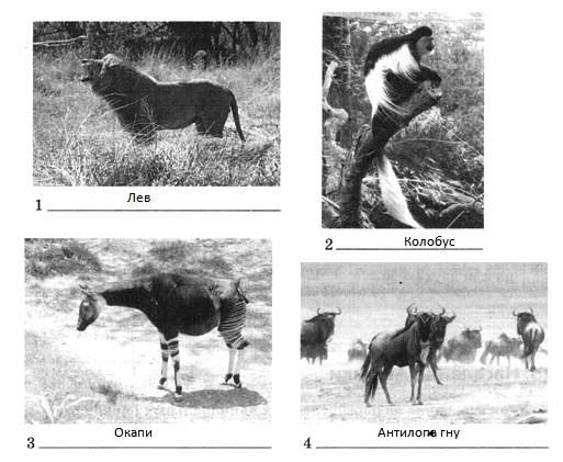 Параграф 24. Разнообразие природы Африки.