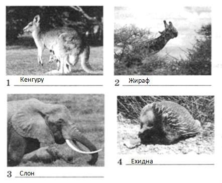 Параграф 30. Особенности природы Австралии.