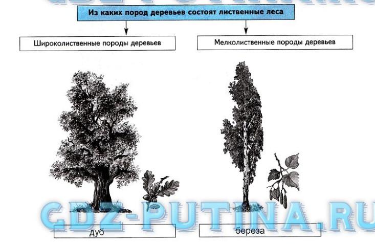 Урок 29. Растительный и животный мир умеренных поясов (§22)